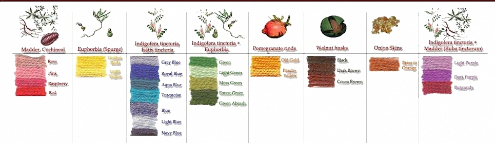 Plants and insects for natural dyes. oriental carpets' glossary